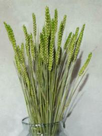 Bos Gedroogde Grassen Tarwe Droogbloemen Groen