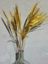 Bos Droogbloemen Gedroogde Miscanthus Mini Pampas 10st. Geel