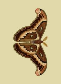 Poster Atlas Vlinder - Butterfly
