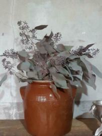 Gedroogde Bos Droogbloemen Roze Eucalyptus Popules met Bes