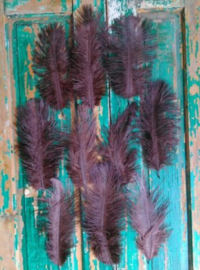 Set Struisvogelveren 10 stuks 15-20 cm - Buin