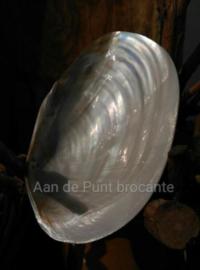 Gepolijste Grote Mossel Macabebe Schelp Parelmoer 18-20 cm