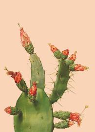 Kaart Ansichtkaart Cactus