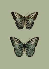 Kaart Ansichtkaart Vlinders 2 - Butterfly