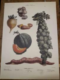 Botanische Prent Vilmorin -The Vegetable Garden- Groente Art Print nr15