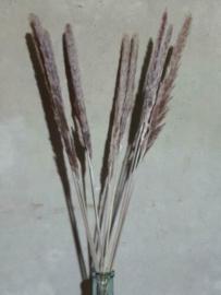 Gedroogde Mini Fluffy Pampas Grassen Droogbloemen Naturel