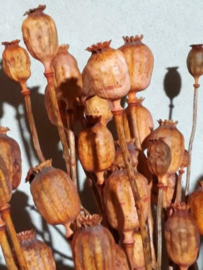 Gedroogde Bos Papaver Cognac Oranje Zalm Droogbloemen