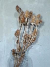 Bos Gedroogde Droogbloemen Kaardebol Distel Kardoen Naturel