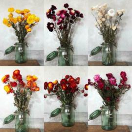 Inspiratie Droogbloemen Strobloemen Helichrysum