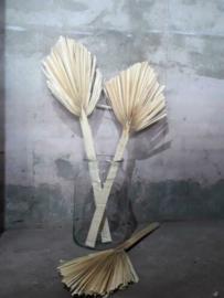 Gedroogde Droogbloemen Palm Palmblad XL Gebleekt
