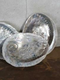 Abalone Parelmoer Ruw Grote Schelp 12-14 cm