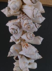 Schelpenhanger - Schelpenslinger  met Witte Schelpen 65 cm