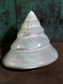 Troca Trochus Pearl Parelmoer Grote Schelp - 10 cm XL