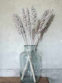 Gedroogde Bos Indian Corn Sorgo White Wash Droogbloemen