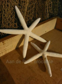 Zeester Finger Starfish 12-15 cm - per 3 stuks