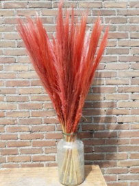Gedroogde Pampasgras Pampas Grassen Droogbloemen Koraal Roze