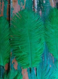 Set Struisvogelveren 10 stuks 15-20 cm - Donker Groen