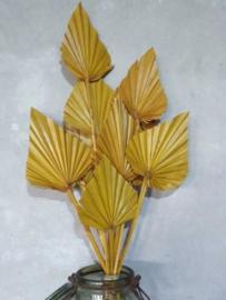 Gedroogde Droogbloemen Palmblad Palm Speer 10 Stuks Geel