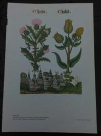 Oude Botanische Prent Bloemen en Bomen Tudor Plaat 30