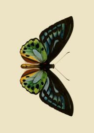 Kaart Ansichtkaart Vlinder Blauw