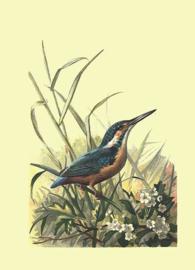Kaart Ansichtkaart IJsvogel - Kingfisher