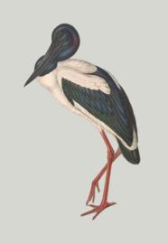 Kaart Ansichtkaart Kraanvogel - Blue Stork