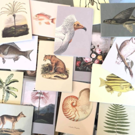 Inspiratie Botanische Prent Ansichtkaarten