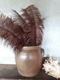 Struisvogelveer Brown - Bruin 60 cm