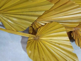Gedroogde Bos Droogbloemen Geel