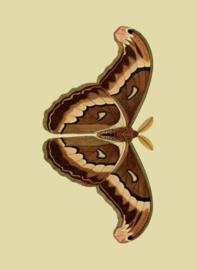 Kaart Ansichtkaart Vlinder Atlasvlinder