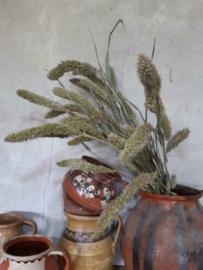 Bos Gedroogde Grassen Naaldaar Setaria Droogbloemen Naturel