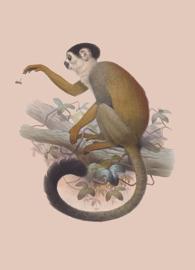 Kaart Ansichtkaart Aapje Doodshoofdaapje - Monkey