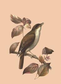 Kaart Ansichtkaart Nachtegaal Vogel - Nightingale
