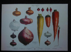Botanische Vilmorin Prent The Vegetable Garden Art Prints