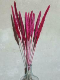 Gedroogde Mini Fluffy Pampas Grassen Droogbloemen Cerise Roze
