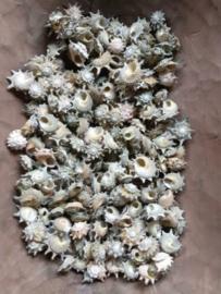 Green Star Cal Cal Schelpen 2-5 cm 500gram