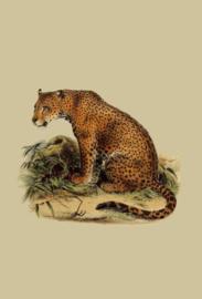 Kaart Ansichtkaart Luipaard - Leopard