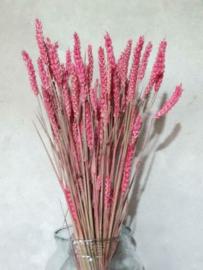 Gedroogde Bos Tarwe Roze Droogbloemen