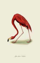 Kaart Ansichtkaart Flamingo Buigend