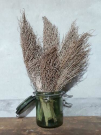 Bos Droogbloemen Gedroogde Dadeltak zonder Vrucht Palm Stem
