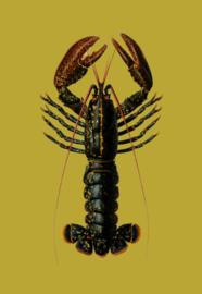 Kaart Ansichtkaart Kreeft - Lobster