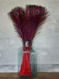 Pauwenveren Pauwenveer Oog Set 5 Stuks - Rode Pen