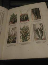 Oud Brocante Plaatjesboek Verkade Vetplanten