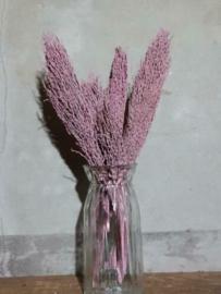 Bos Droogbloemen Gedroogde Dadeltak Palm Roze
