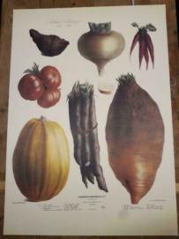 Botanische Prent Vilmorin -The Vegetable Garden- Groente Art Print nr12