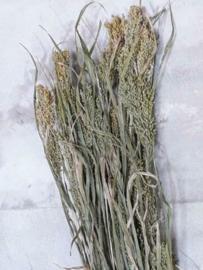 Bos Gedroogde Grassen Panicum Gierst Droogbloemen Naturel