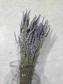 Bosje Gedroogde Lavendel Droogbloemen Lavendin