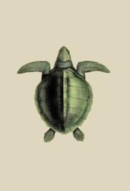 Kaart Ansichtkaart Schildpad - Turtle