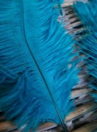 Set Struisvogelveren 10 stuks 15-20 cm - Blauw Turquoise