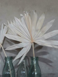 Gedroogd Palmblad Palm Blad Sun Speer Gebleekt 3st.